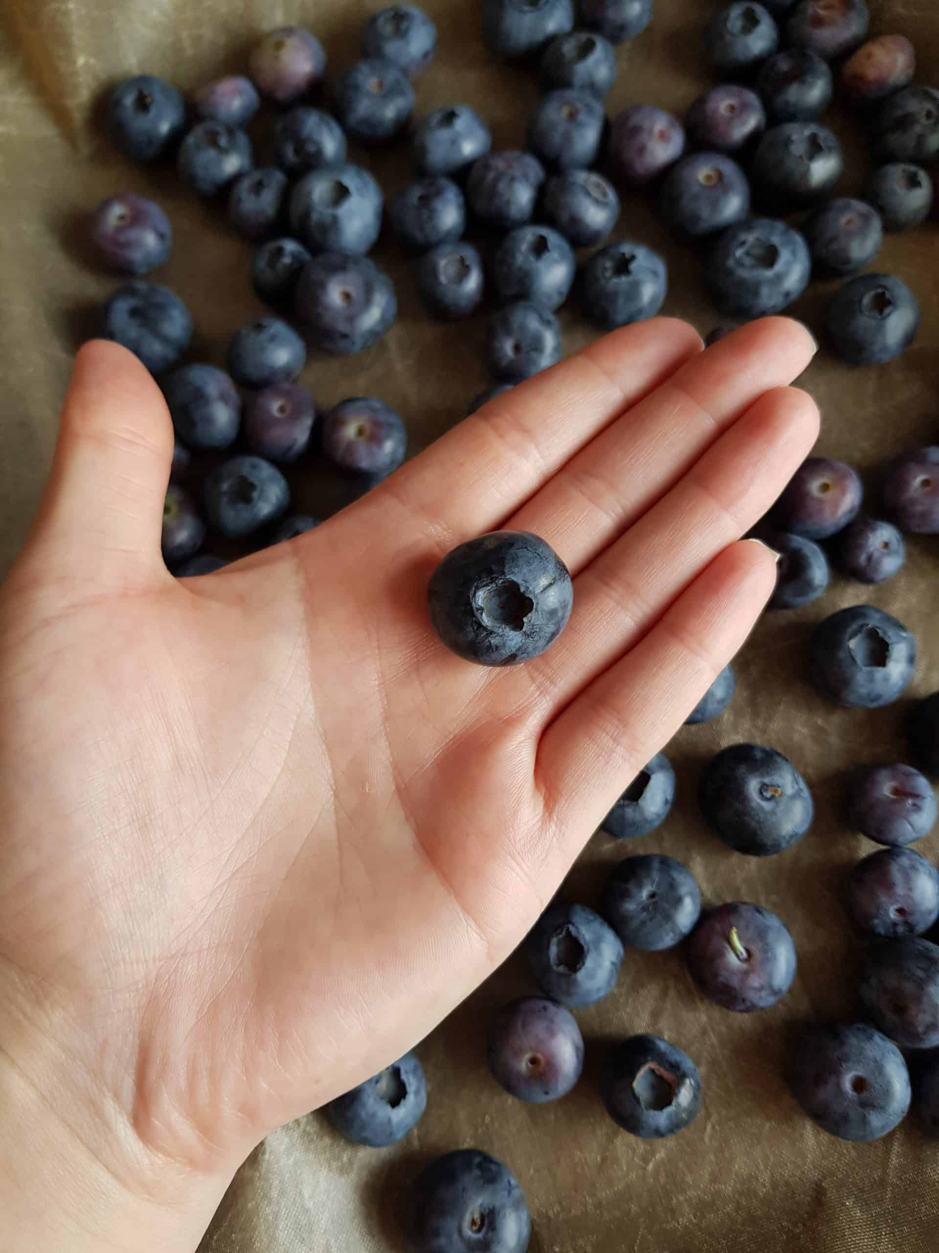 A hand holding a blueberry.