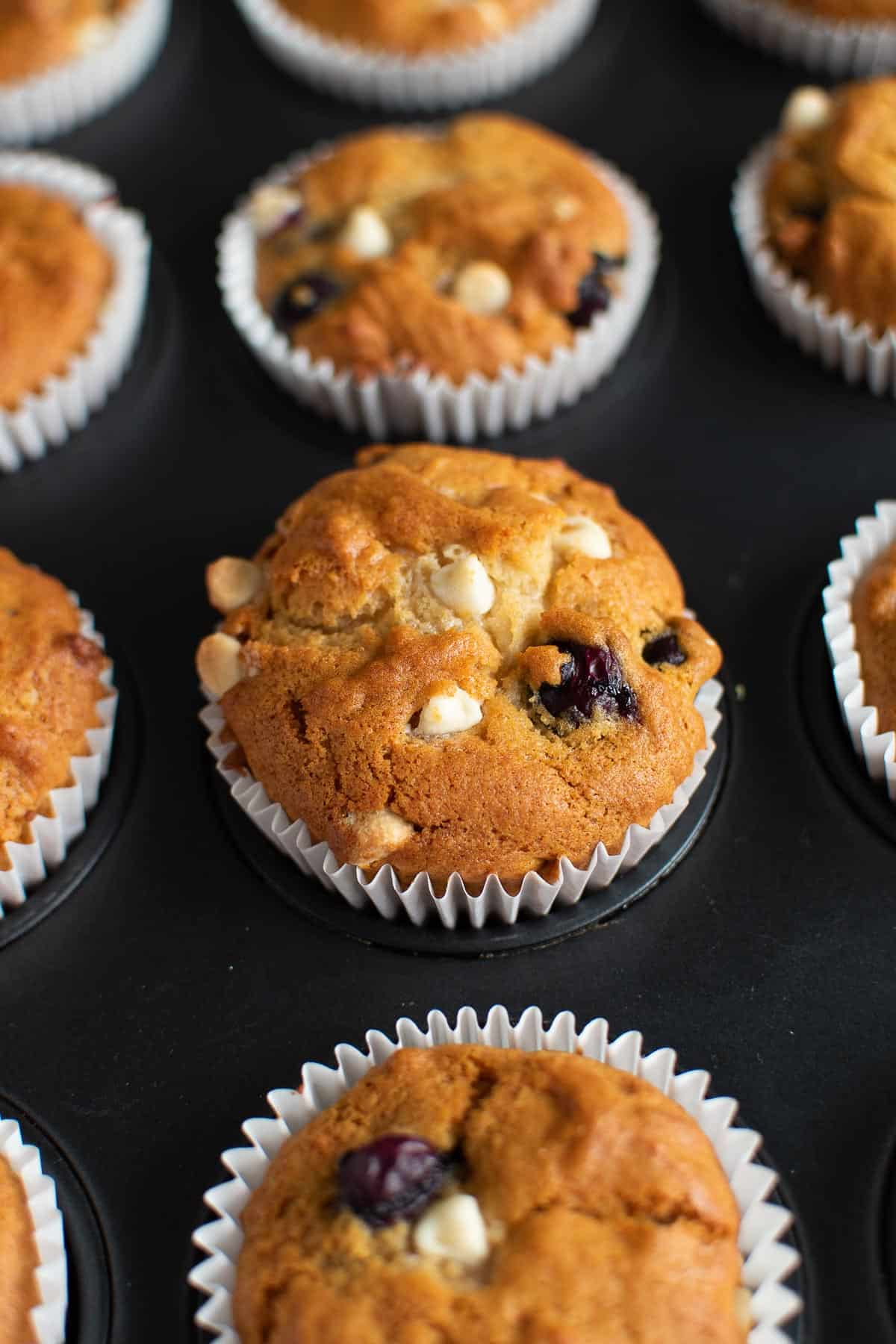 Close up of a white chocolate blueberry muffin in a muffin pan.